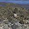 sacredkingfisher001.png