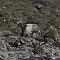 sacredkingfisher003.png