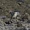 sacredkingfisher004.png