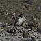 sacredkingfisher005.png