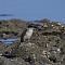 sacredkingfisher006.png